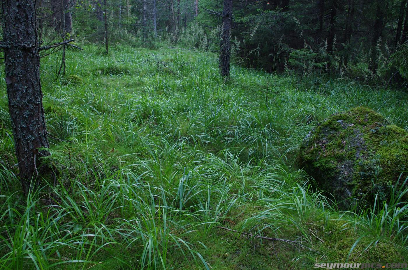 seymourpics-wallpaper-finland-forest-glade_1400px.jpg